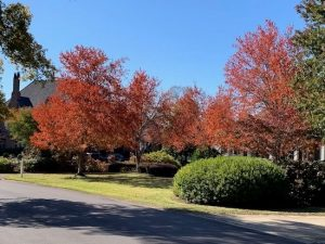 Another gorgeous autumn day in Vestavia Hillls